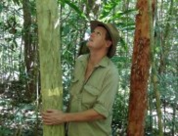 CSIRO's Matt Bradford admires a slow-growing Gossia shepherdii (Lignum) on the Robson Creek rainforest plot, which he estimates is close to 1,000 years old.