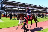 Kogan's million-dollar Melbourne Cup tippo