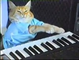 YouTube celebrity Keyboard Cat