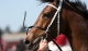 Long-term punt with Racing Victoria for Telstra