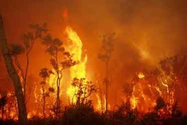 eftpos and employees dig deep for bushfire victims