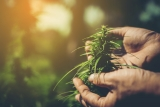 Creso Pharma rides the positive cannabis tailwinds