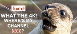 The curtain goes up on Foxtel in 4K on Channel 444 at last – but not Channel 888