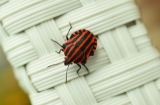Indian outsourcer Wipro has a problem with bugs. Bed bugs