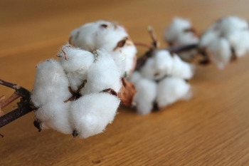 New IoT network to help irrigate cotton farms