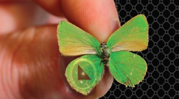 Researchers tap into the butterfly effect