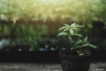 Creso Pharma brings its cannabis products to the Scandinavian market
