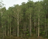 Forest collapse threatens Melb water supply